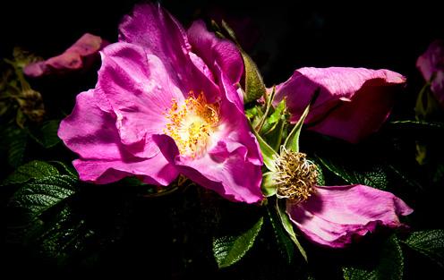 blomma01